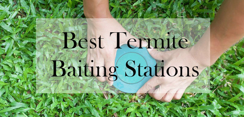 How To Install Termite Bait Stations Guide Bait Options